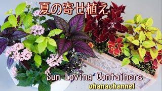 【夏の寄せ植え】暑さに負けない❕秋まで楽しむ❕初めてでも出来る(゚∀゚)✨Planting Sun-loving Containers🌞