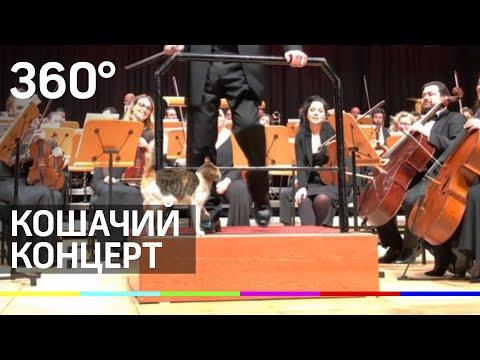Котик спас выступление симфонического оркестра