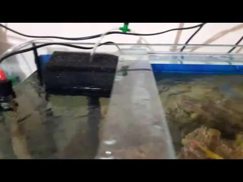 Biolife Filtre Temizliği, Akvaryum Balıkları, Akvaryum Temizliği