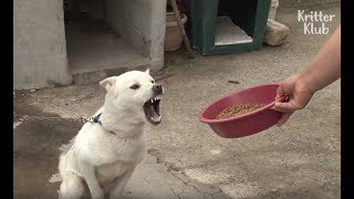 What Made The Dog So Angry During Mealtime? (Part 2) | Kritter Klub