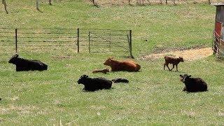 Beef School: Grazing Management