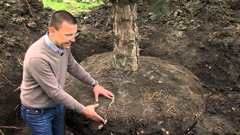 Ganz und zu Extrem Großen Baum einpflanzen | Praskac - YouTube #GQ_05