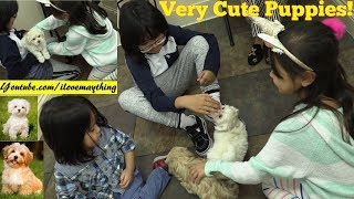 Buying a PUPPY Experience. We are Getting 2 Puppies! Havanese Puppies. Playtime with Hulyan and Maya