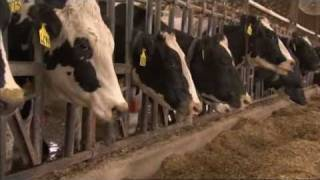 What intensive farming means -- for the animals and for the environment. (BBC Countryfile)