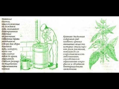 Органические удобрения из травы Крапивы и Окопника