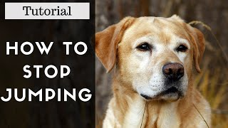 How To Teach Your Dog To Stop Jumping Tutorial