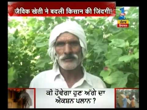 Organic farming by a farmer in Sirsa changed the life of whole village farmers