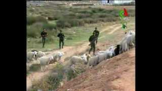 Algerie,Tebessa,Contrebande de betail et carburant.