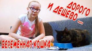 Беременная кошка ДОРОГО VS ДЕШЕВО Whiskas VS Kitekat
