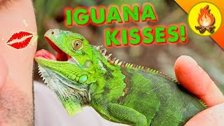 Iguana Kisses...Gross -or- Gotta Have One?!