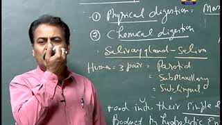 B.Sc Second Year | Zoology | Physiology of Digestion | CLASSROOM