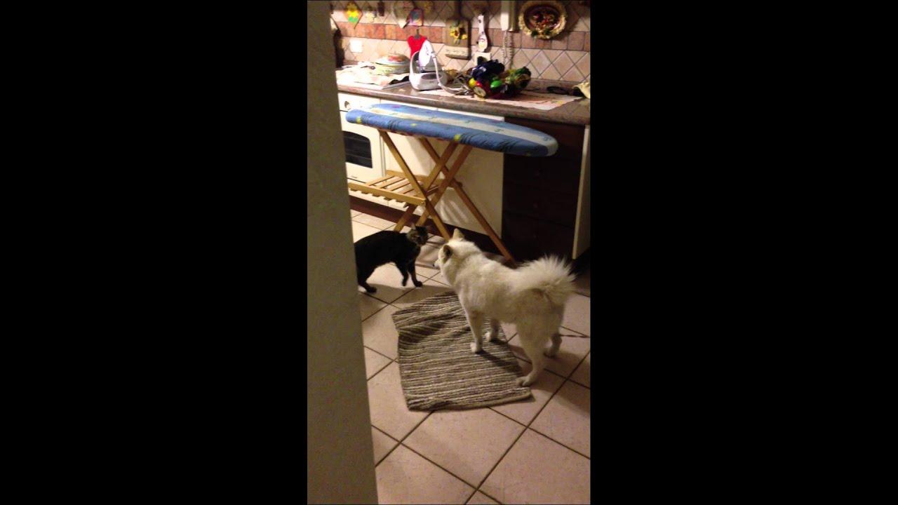 Youtube Cat Eye Tutorial: CAT VS DOG!! MAINE COON ATTACK JAPANESE SPITZ