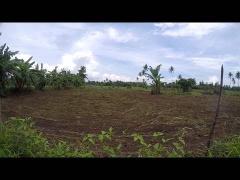 Buying Land in Calabanga Philippines Expats