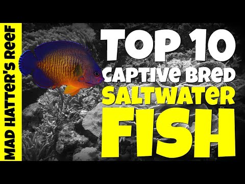 Top 10 Captive Bred Saltwater Fish