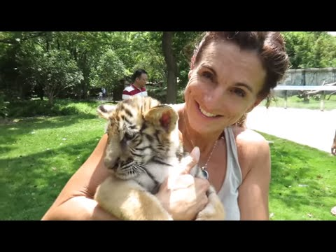 WE PLAYED WITH A BABY TIGER IN CHINA!! Brian Barczyk