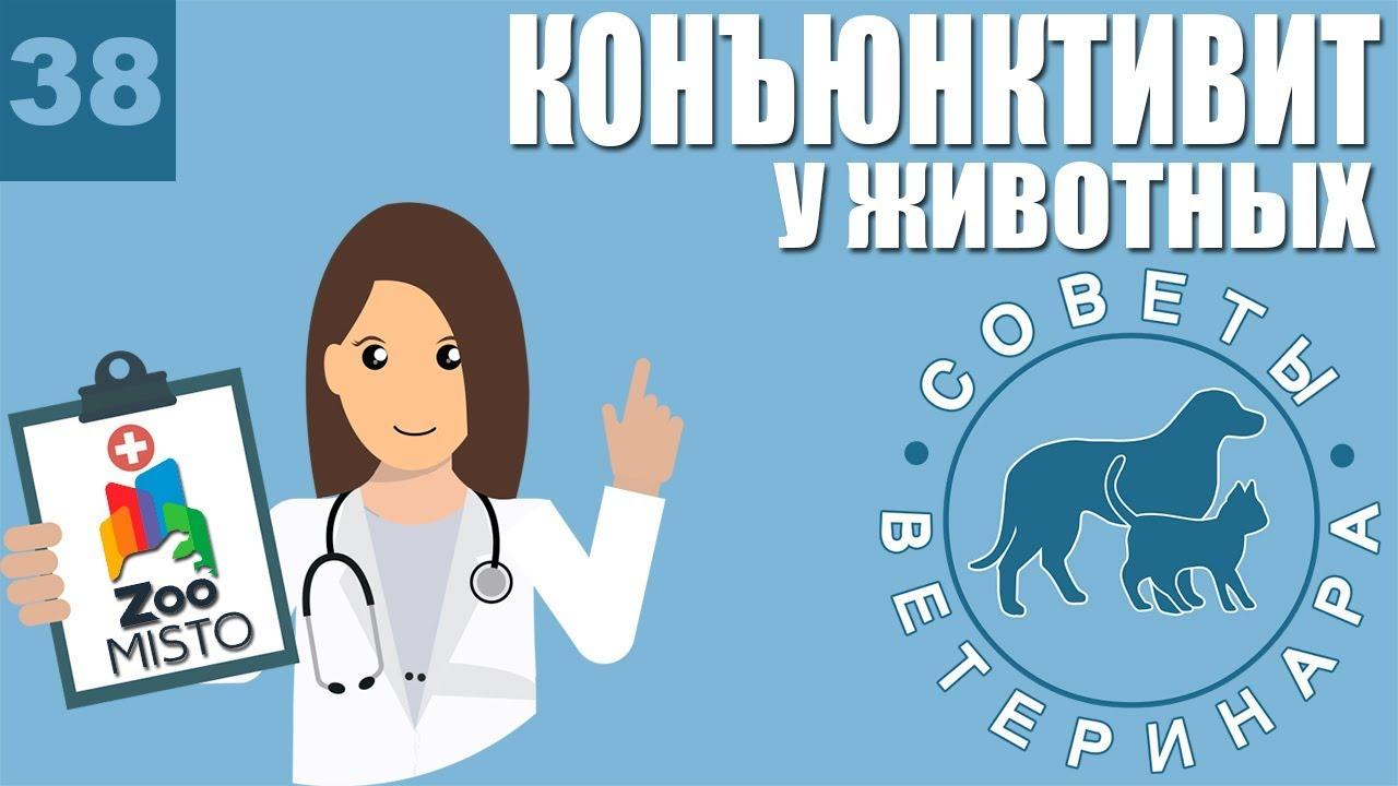 Конъюнктивит у животных | Причины конъюнктивита | Симптомы и лечение болезни | Советы Ветеринара