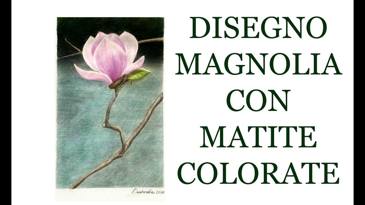 Download DISEGNO una Magnolia CON  le MATITE COLORATE     (Disegno)Arte per Te