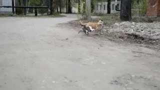 кошки против собак, приколы с животными