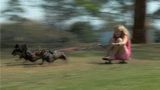 Speedy Sausage Dog Chariot