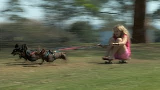 Sausage Dog Chariot