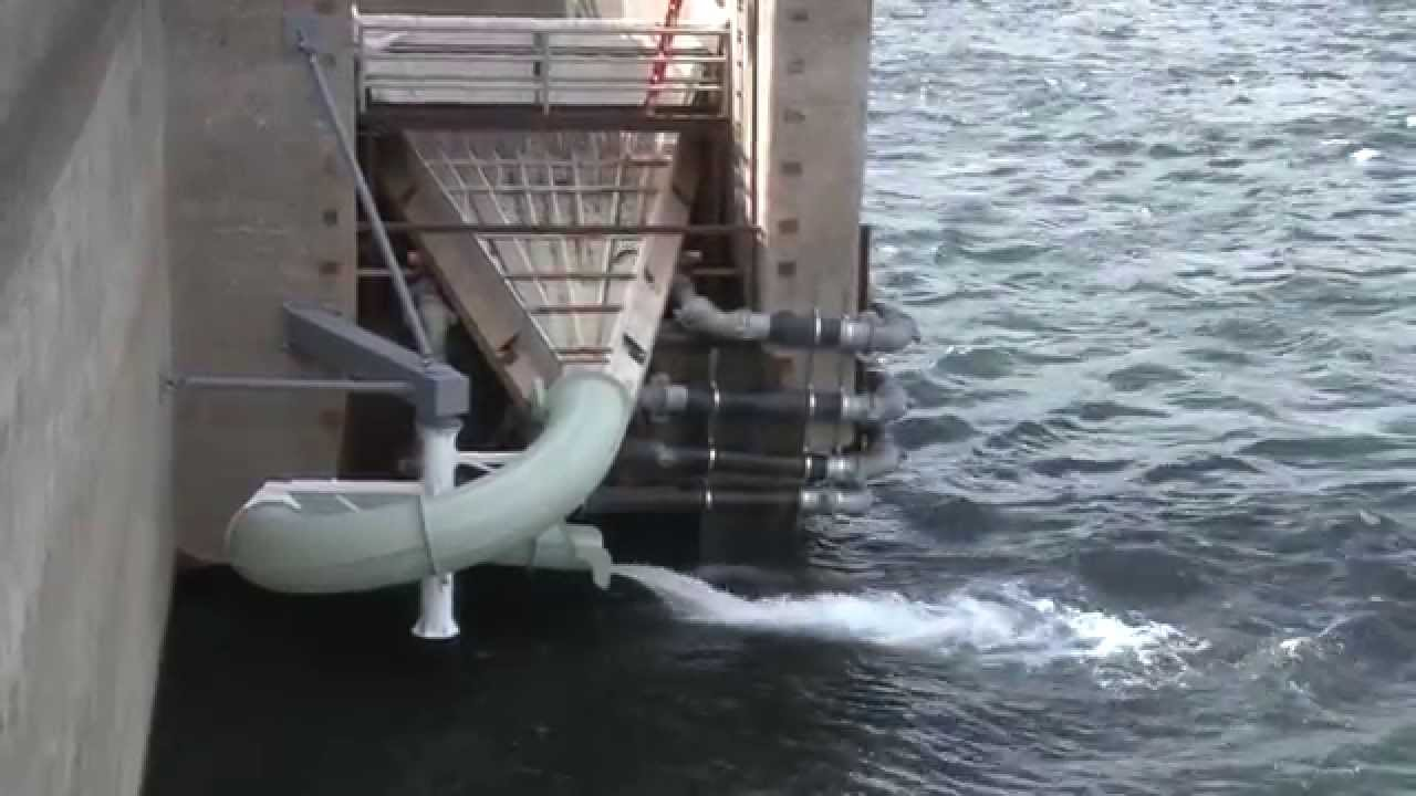 Wanapum dam fish ladder july 9 2014 youtube for Dam fish count