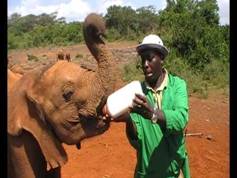 Elephant Orphanage Kenya