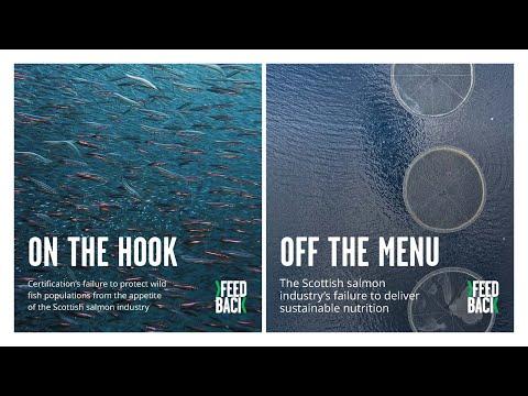 Webinar: Plenty Of Fish In The Sea? Exploring Aquaculture's Appetite For Wild Fish