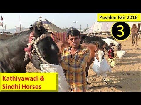 पुष्कर मेला Pushkar Fair Mela Horse Market 2018 : Indian Ghoda Bazar : Equine Trading - YouTube