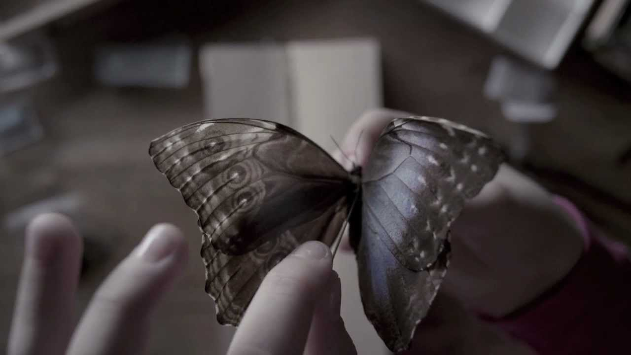 The Butterfly Room - Teaser