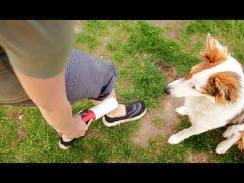 How To Get Dog Hair Off Clothes
