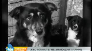 13 собак отравили крысиным ядом в Бодайбо