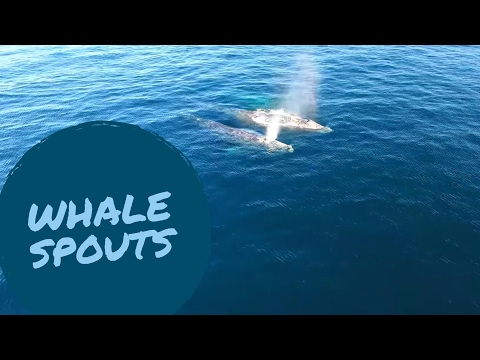 All Day Whale Watch Dana Point With Gray Whales & Dolphins