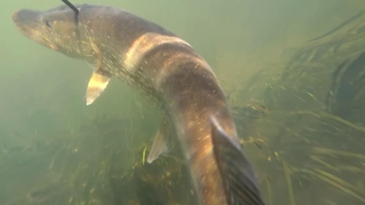 Подводная охота осенью в чистой воде