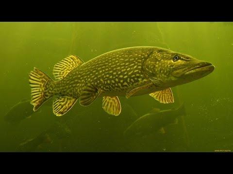 рыбалка на малышевской протоке летом на спиннинг