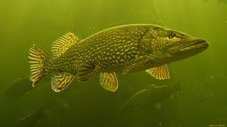 Зимняя рыбалка на Реке Обь 2016