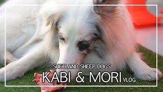 [Vlog] KABI&MORI #4 (생고기주의 )