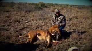 Lions Part 2