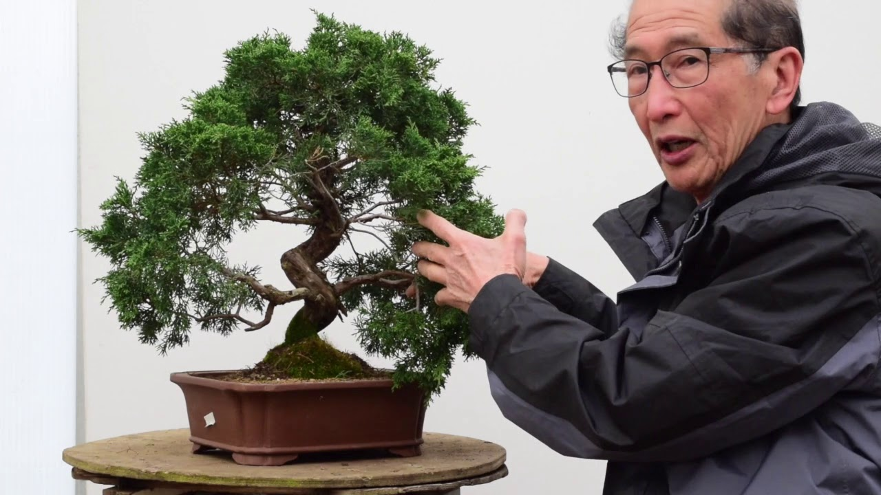 Juniper Bonsai Re Shape Youtube