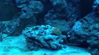 125 Gallon Saltwater Aquarium Reef Build Day 94