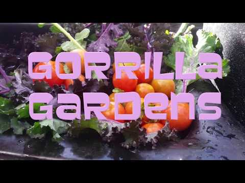 Guerrilla Gardens Activist San Diego