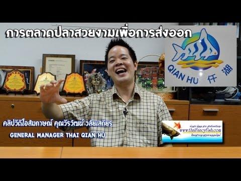 ส่งออกปลาสวยงาม fish Marketing Thai Qian Hu