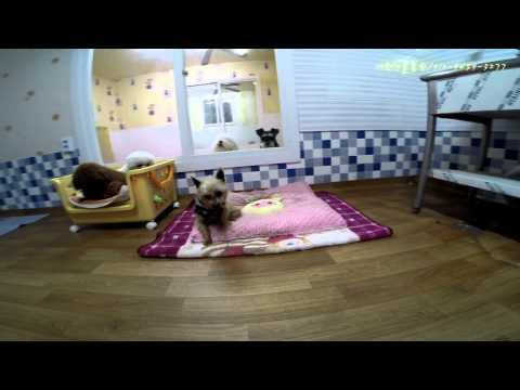 Dog hotel - 애완견돌봄원 호텔방 VIP Room~~