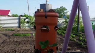 Вертикальная грядка.Клубника в трубе Часть 2.(Предлагаю Вашему вниманию вариант вертикального выращивания садовой клубники.Этот способ не затратен..., 2016-05-28T18:01:31.000Z)