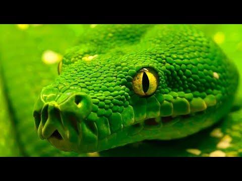 Características de la Serpiente - TvAgro por Juan Gonzalo Angel ...