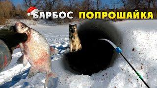Зимняя рыбалка 2020! Ловля леща зимой! Барбос отобрал добычу :)