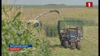 В Беларуси началась уборка кукурузы
