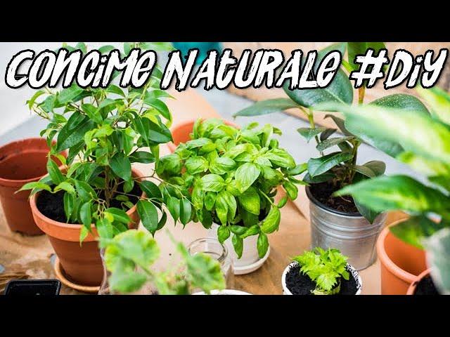 Concime Naturale Fertilizzante Liquido Fai Da Te Liquid Fertilizer Diy Youtube
