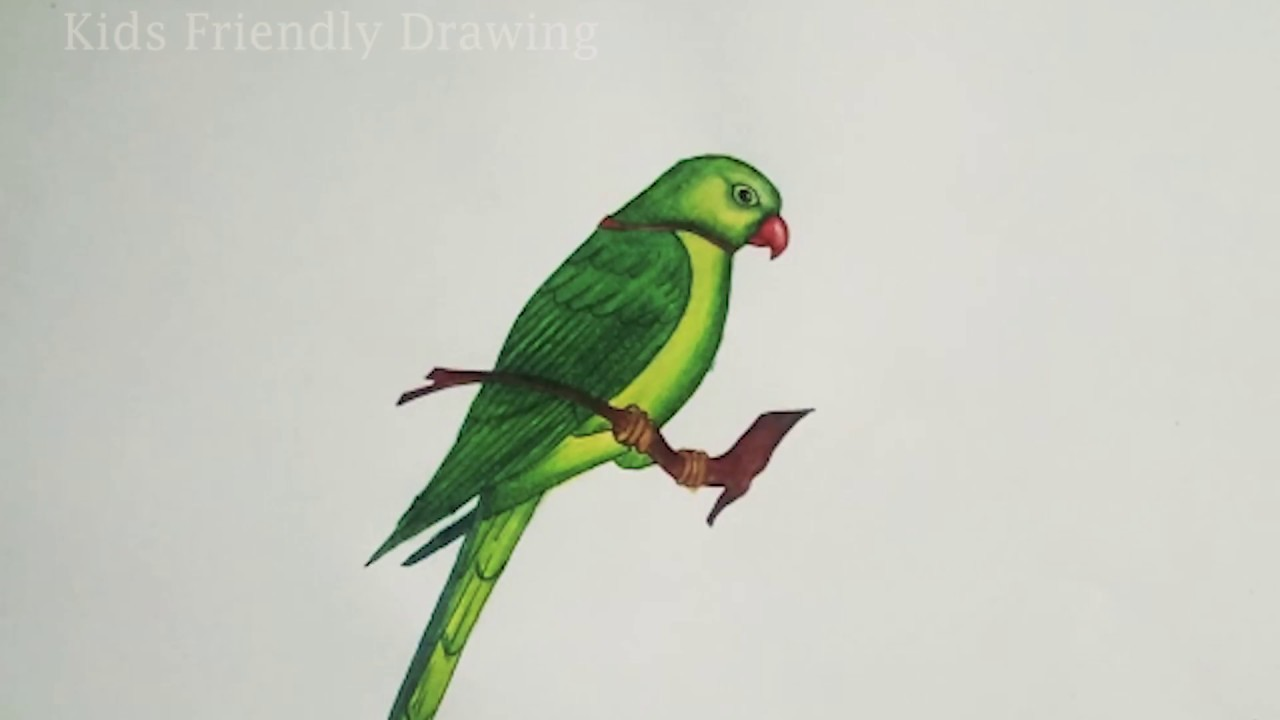 How To Draw Parrot Step By Step Easy Parrot Drawing Easy Youtube