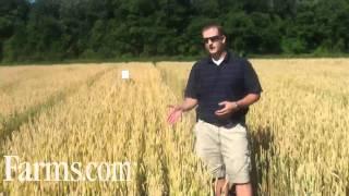 Agronomy Video: Caramba Fungicide Control on Fusarium Head Blight in Wheat.