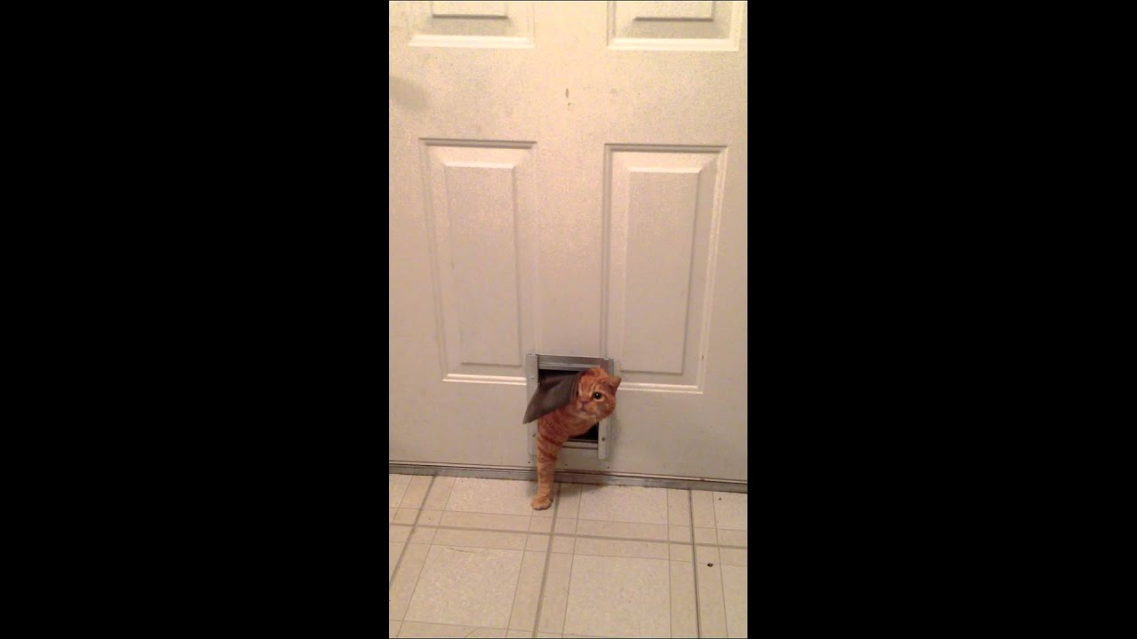 Fat cat squeezing through dog door